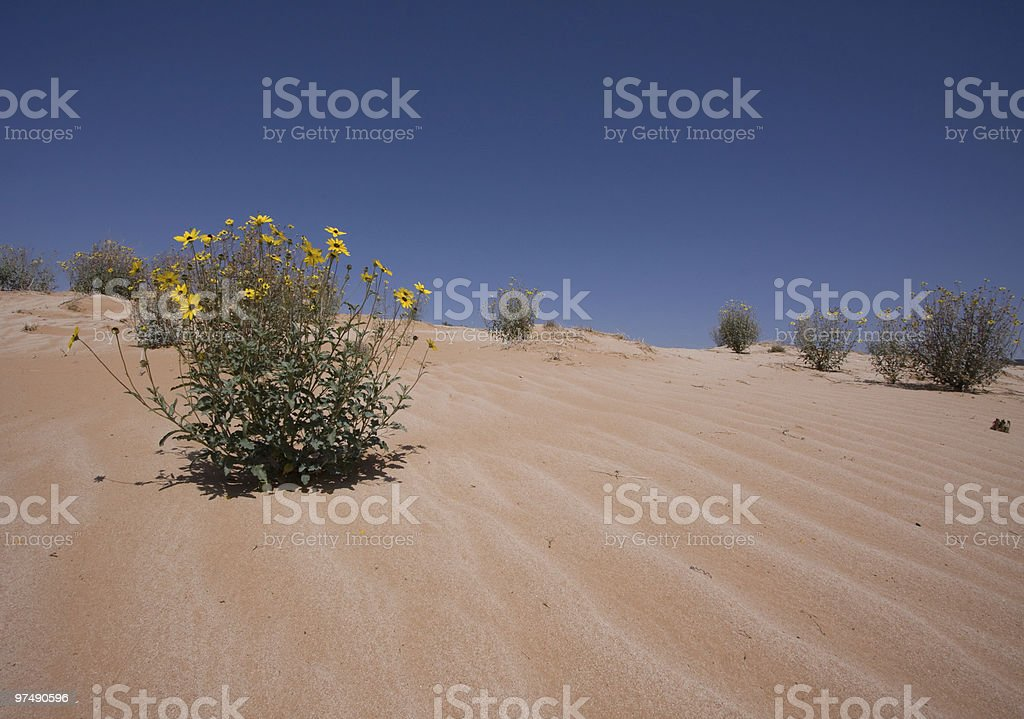 Flowers Dunes and Sky royalty-free stock photo