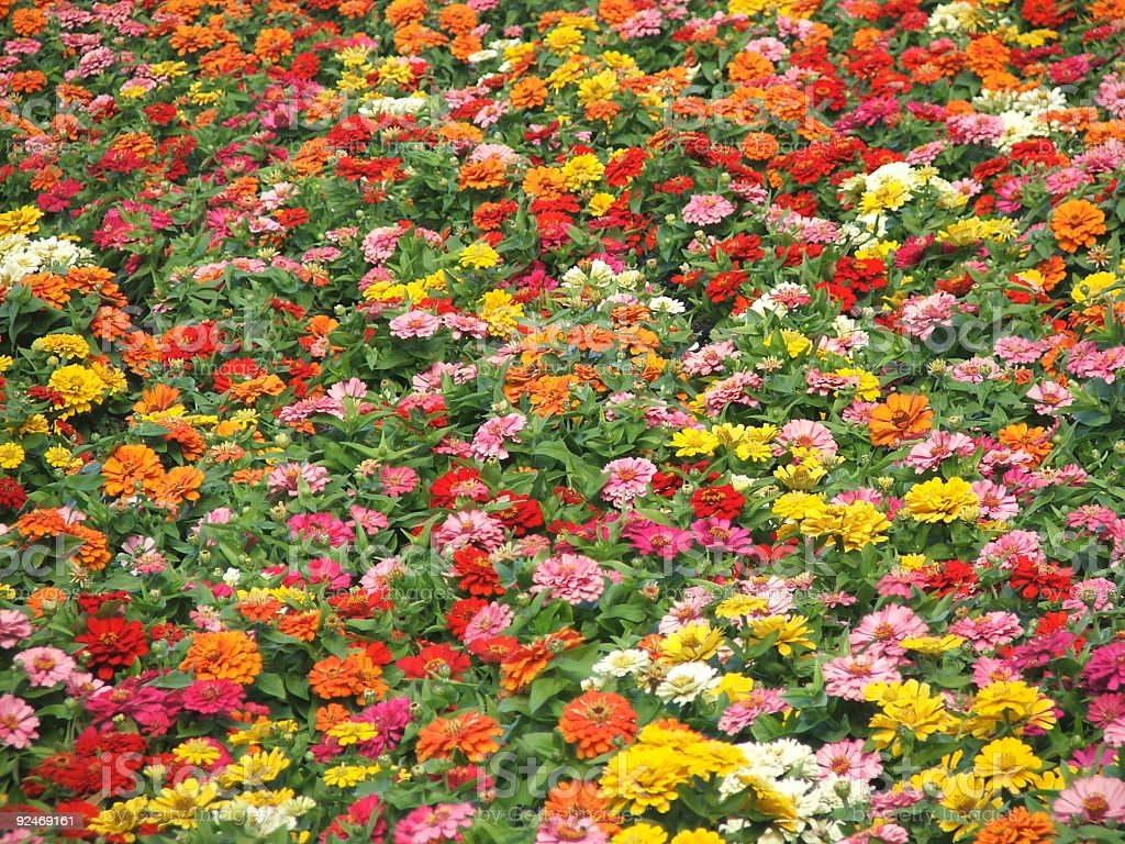 Flowers - fall colors royalty-free stock photo