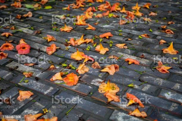 Flowers fallen on the floor picture id1164462306?b=1&k=6&m=1164462306&s=612x612&h=zu1rq0xihoaqcwlcbzskewy ecs2xguzt5vid8mfnlq=