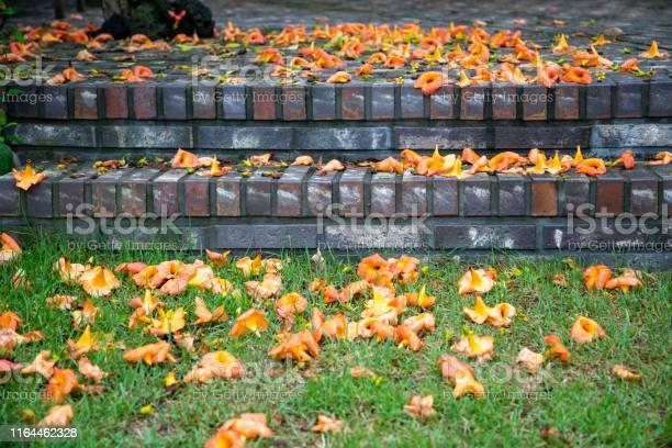 Flowers fallen on the floor picture id1164462328?b=1&k=6&m=1164462328&s=612x612&h=vz8jx9mlfbrrm0094ytvmv z5hn5q6s35ymecpb pbo=