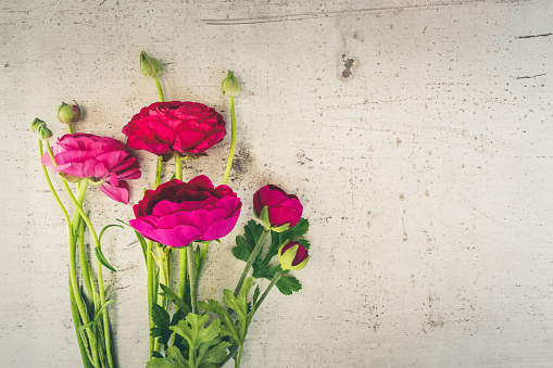 Flowers Flat Lay Composition Stock Photo - Download Image Now