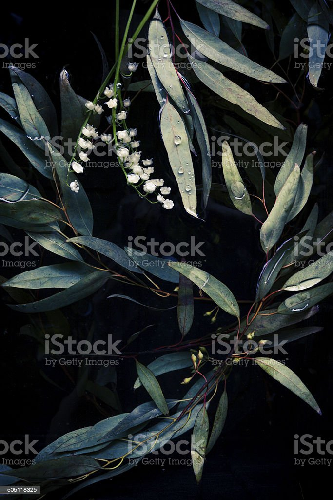 Flowers Floating In A Dark Well Or Pond stock photo