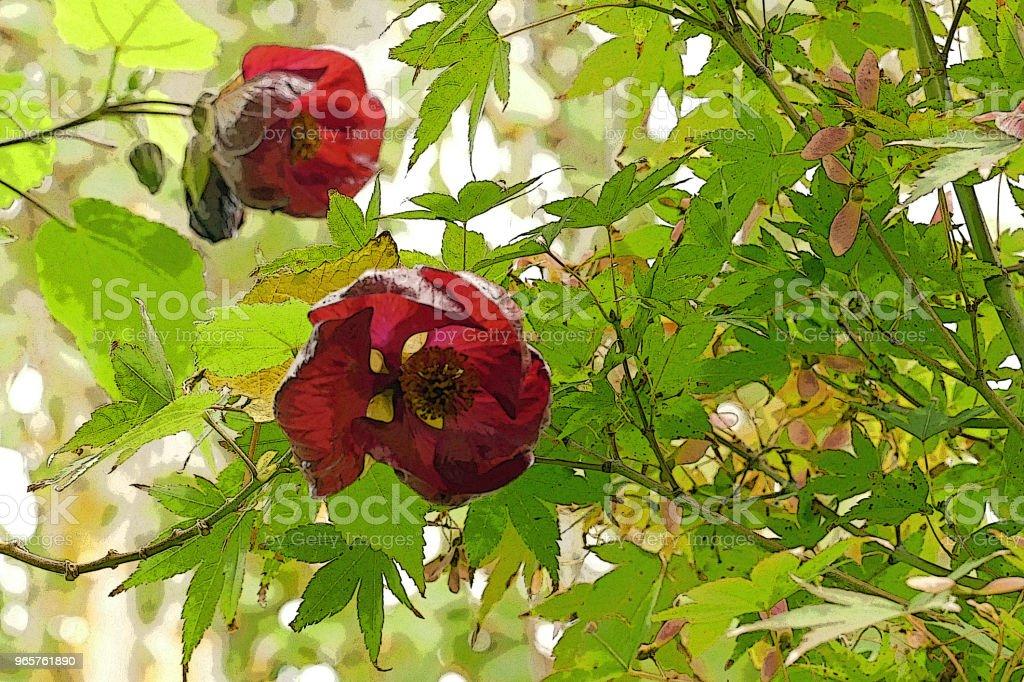 GARDEN SCENE Flowers Flowering Maple - Royalty-free Architecture Stock Photo