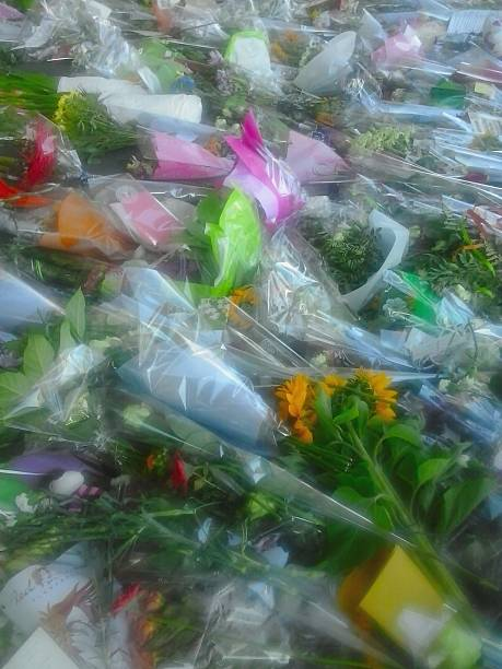 Flowers for a plane crash Memorial flower bouquets for the dead of the MH17 flight, recently apparently shot down by a Ukrainian missile. The flowers are just outside Amsterdam Airport, presented by citizens and Authorities. apparently stock pictures, royalty-free photos & images