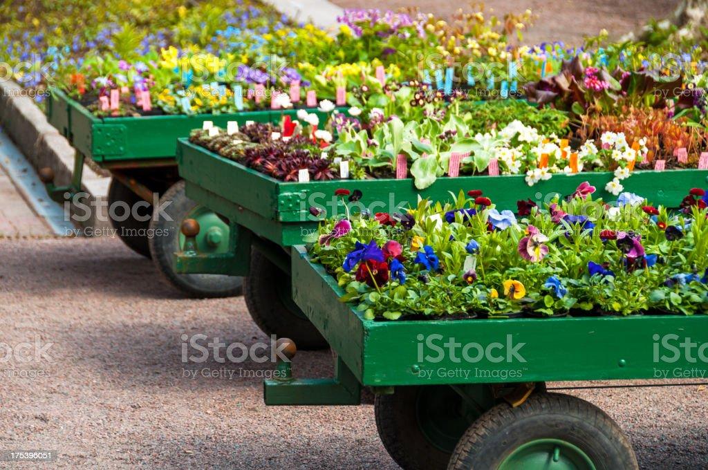 Blumen für sale – Foto