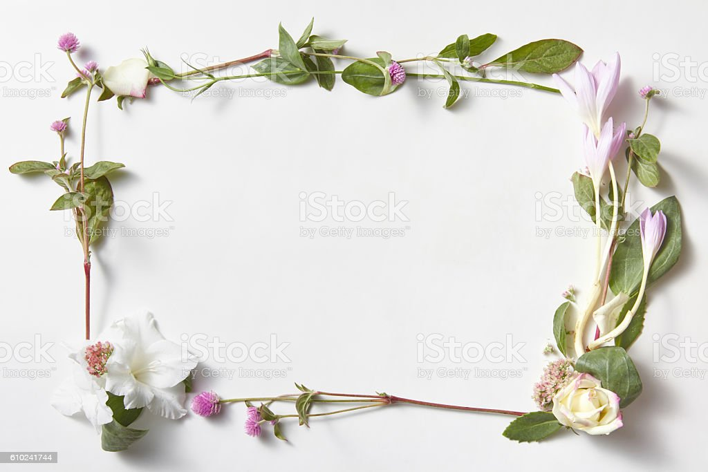 flowers frame in white background isolated stock photo