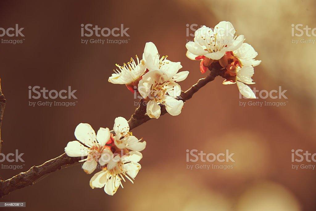 Flowers fruit tree stock photo