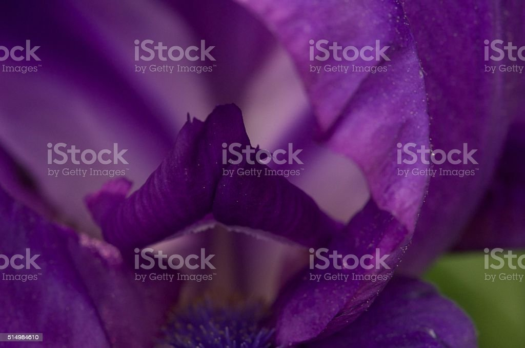 Flowers give from any view stock photo