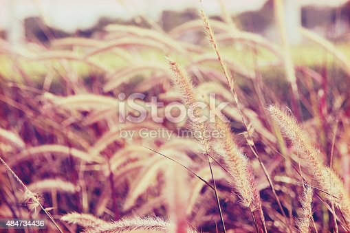 519188550istockphoto flowers grass background in sweet tone 484734436