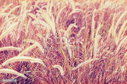 519188550istockphoto flowers grass background 484726718