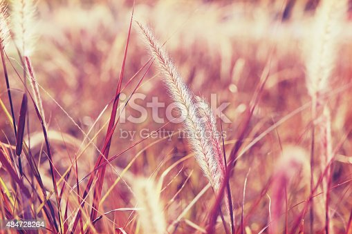 519188550istockphoto flowers grass 484728264