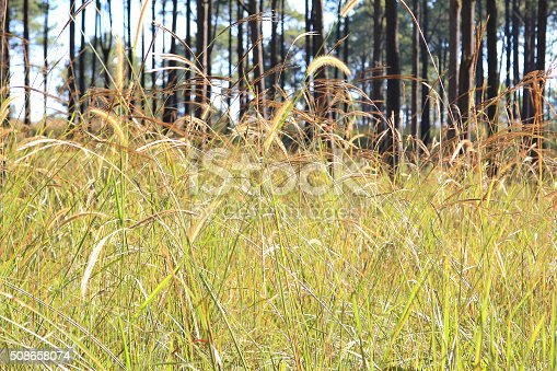 519188550istockphoto Flowers grass 508658074