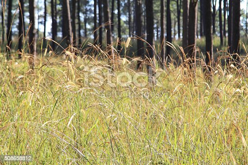 519188550istockphoto Flowers grass 508658812