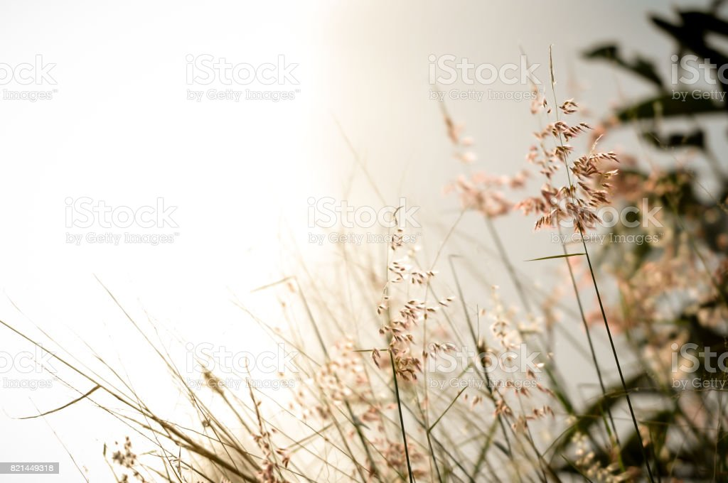 Flowers grass with beautiful light blurred background vintage. stock photo