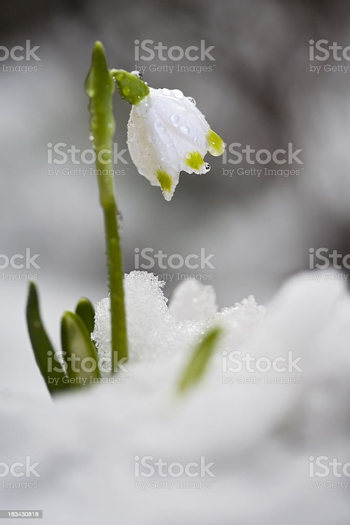 flowers greeting the nature royalty-free stock photo