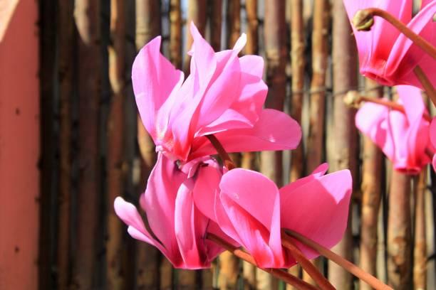 Fleurs poussant dans une caisse de fleur en bois - Photo