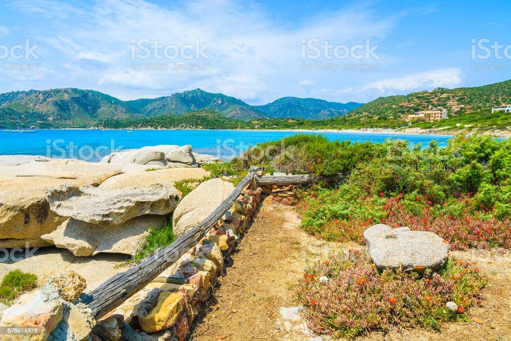 Flowers growing on coast of Sardinia island near Campulongu beach, Italy stock photo