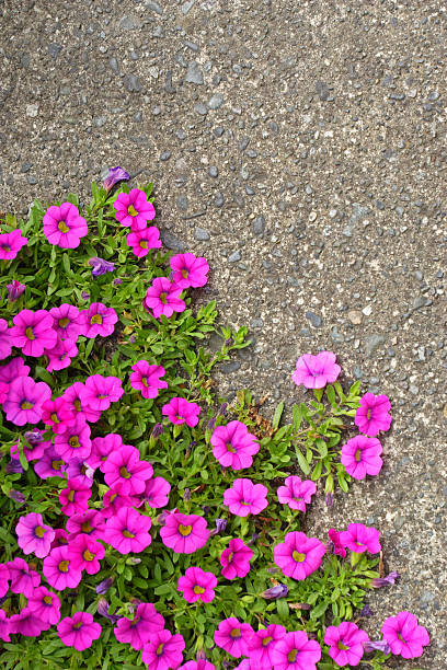 Flowers growing on pavement stock photo