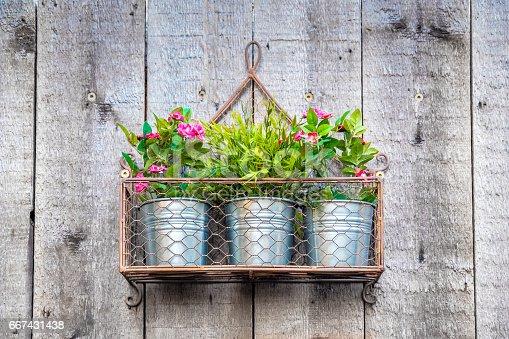 istock Flowers hanging in metallic pots 667431438