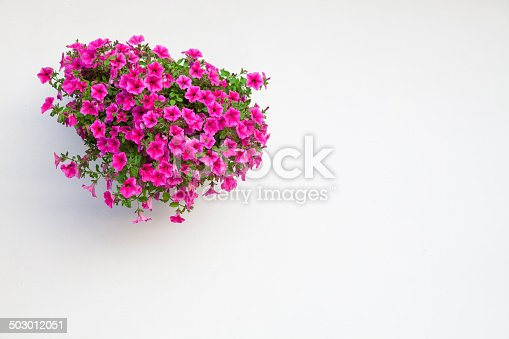 Basket of Petunias hanging on white wall