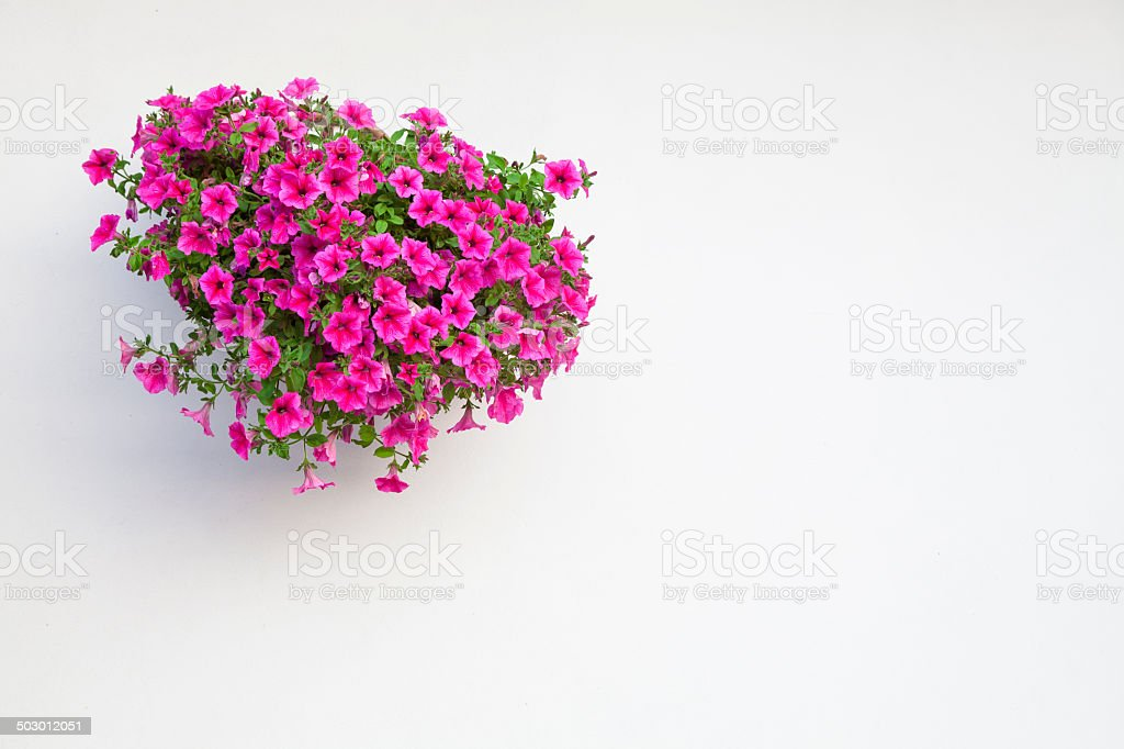 Flowers hanging on the wall stock photo