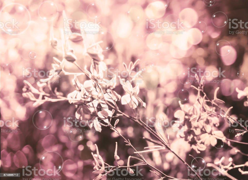 Flores, iluminadas pelo sol - foto de acervo