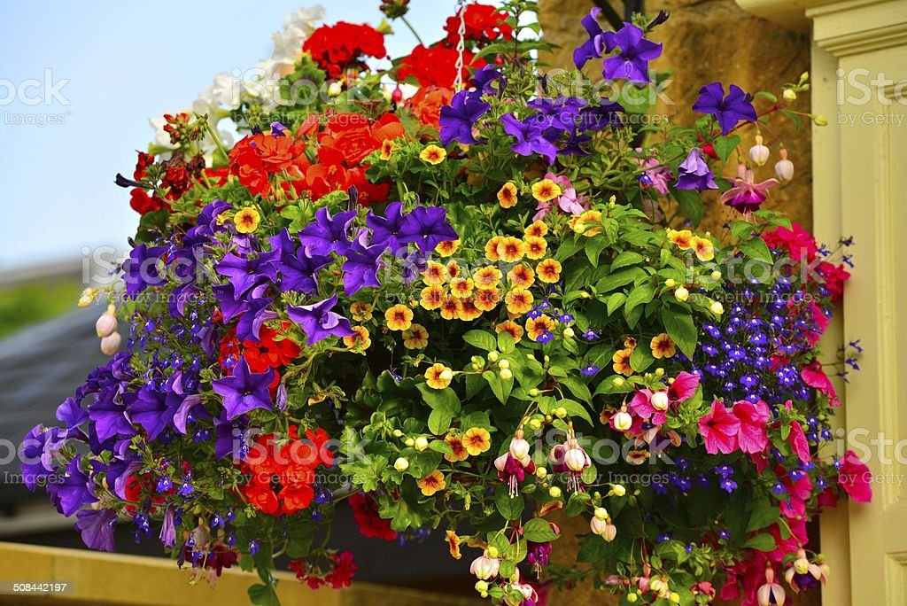 Blumen in einem Korb – Foto