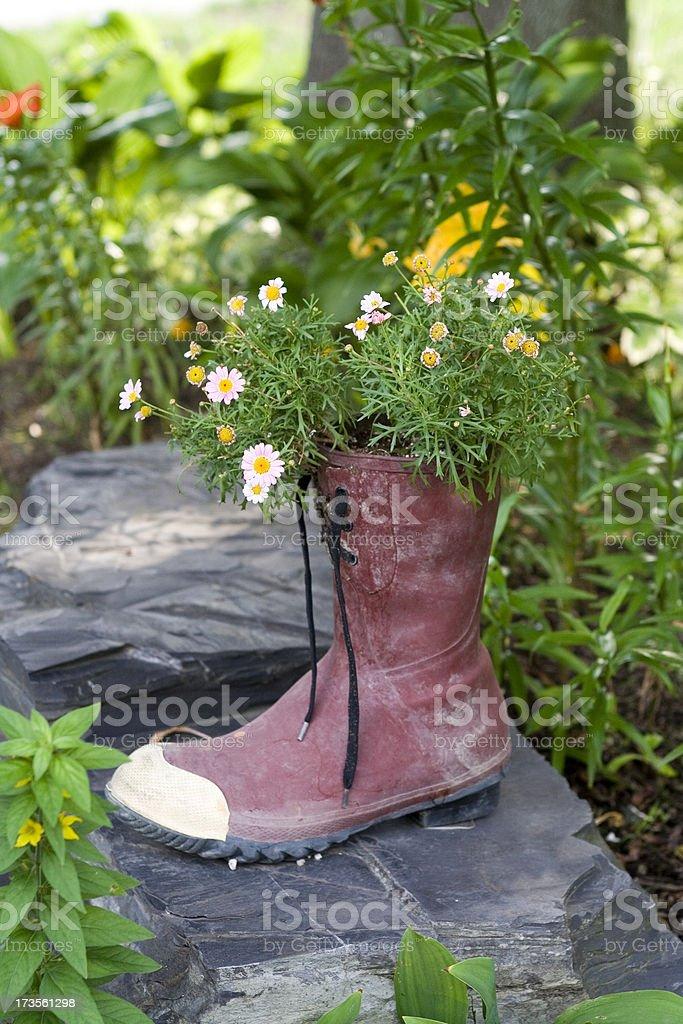 Blumen in einem Schuh – Foto