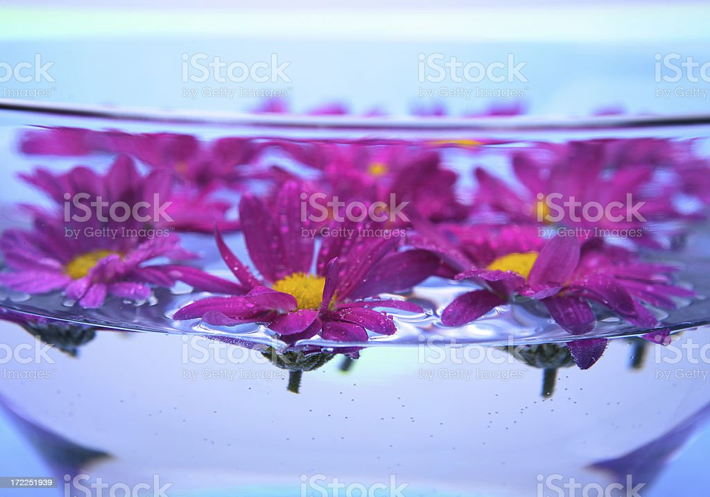 Flowers in a bowl royalty-free stock photo