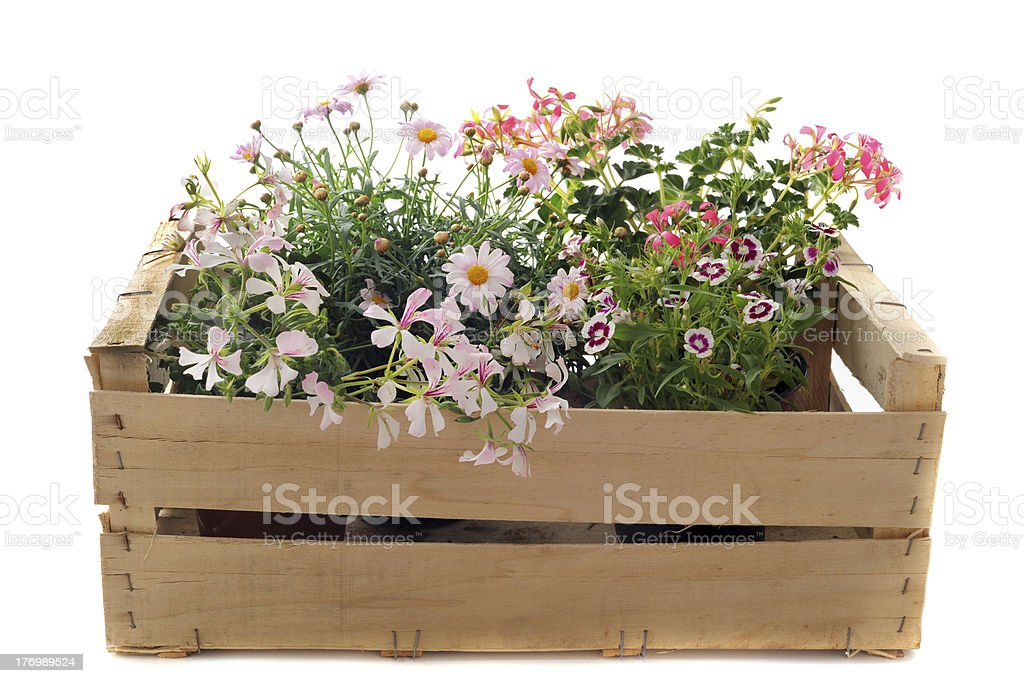 flowers in a crate stock photo