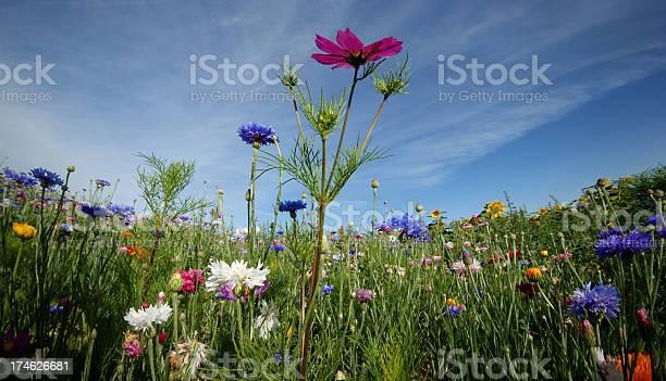 Photo of Flowers in a Field