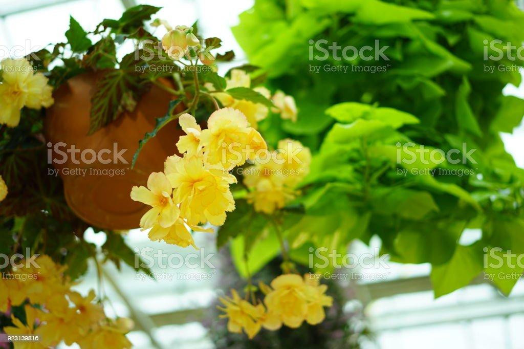 Flowers in a garden in Japan stock photo