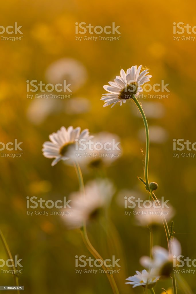 Flowers in a meadow at springtime stock photo
