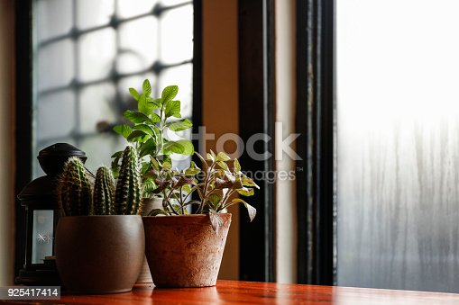 Flowers in a pot on a window sill at the window