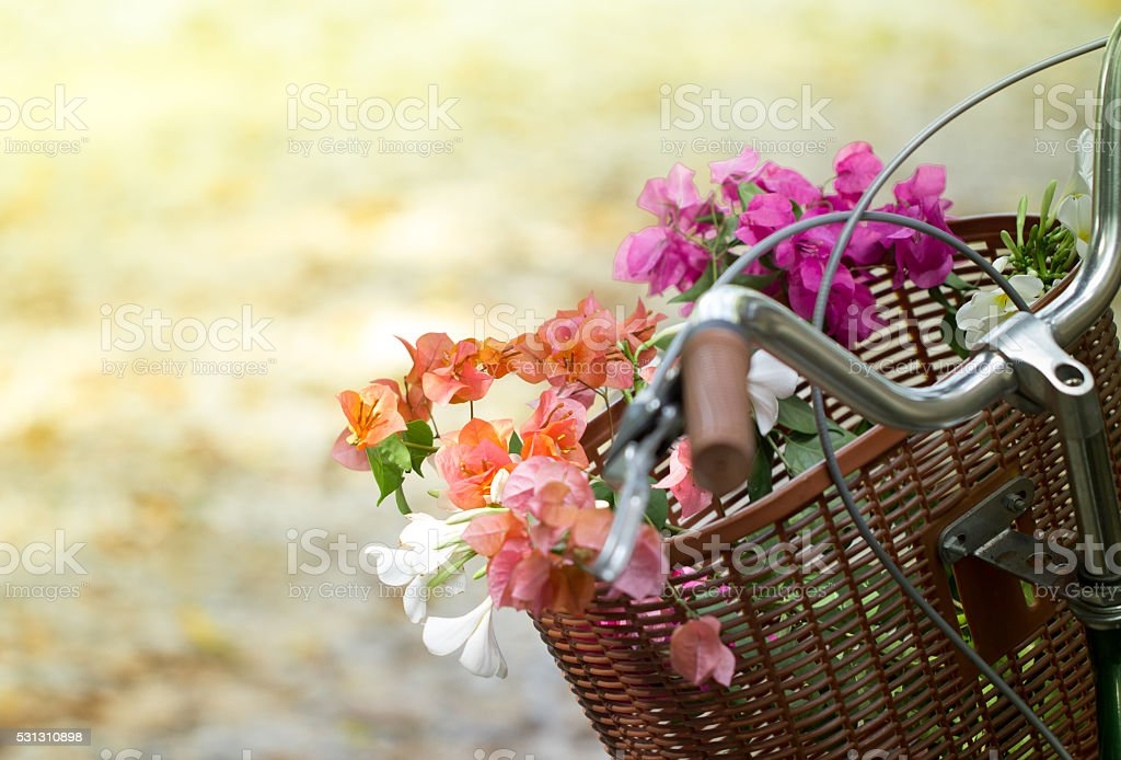 flowers in bicycle basket,  natural blur background and sunlight stock photo