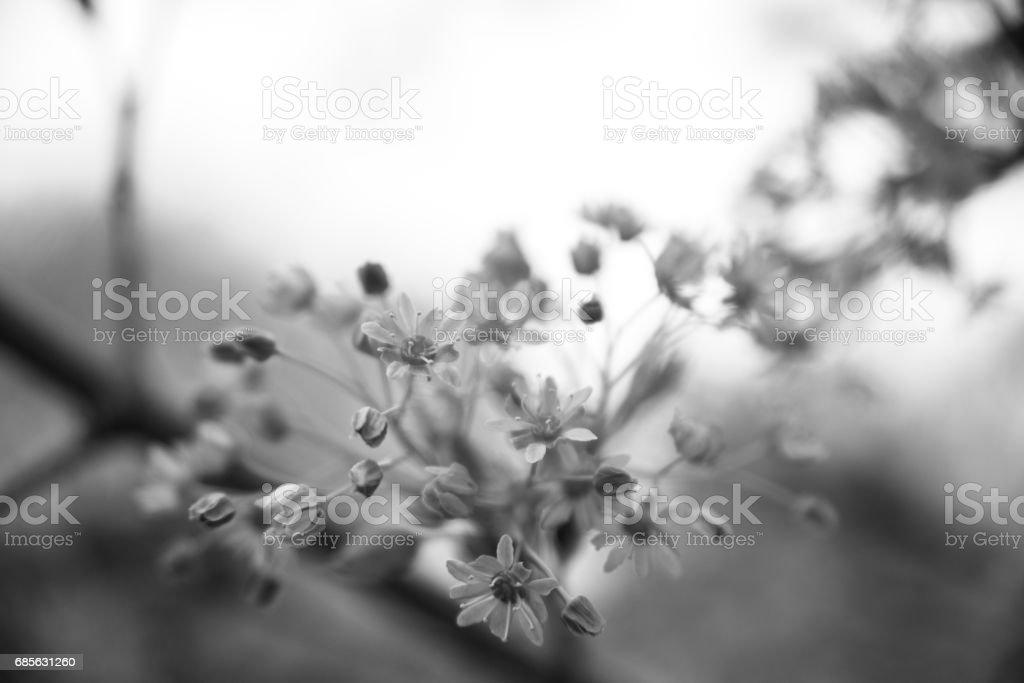 꽃 in black and white royalty-free 스톡 사진