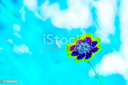 157681198 istock photo Flowers in blue abstract background 1219339033