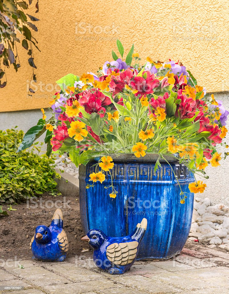 flowers in blue pot on garden terrace, outdoor stock photo