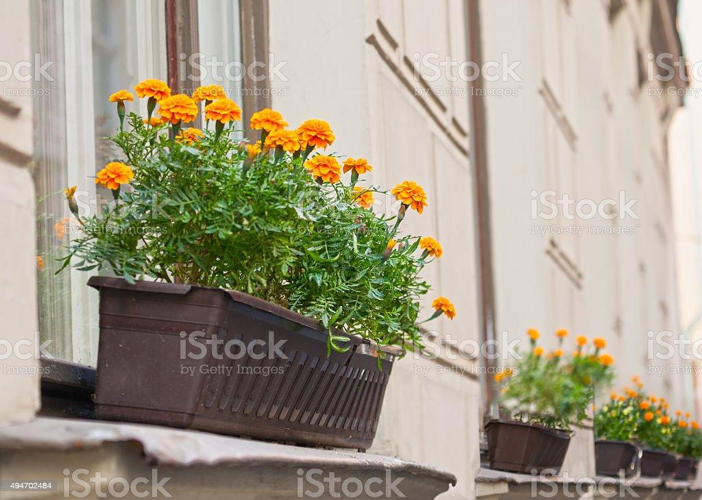 Flowers in box on windowsill stock photo