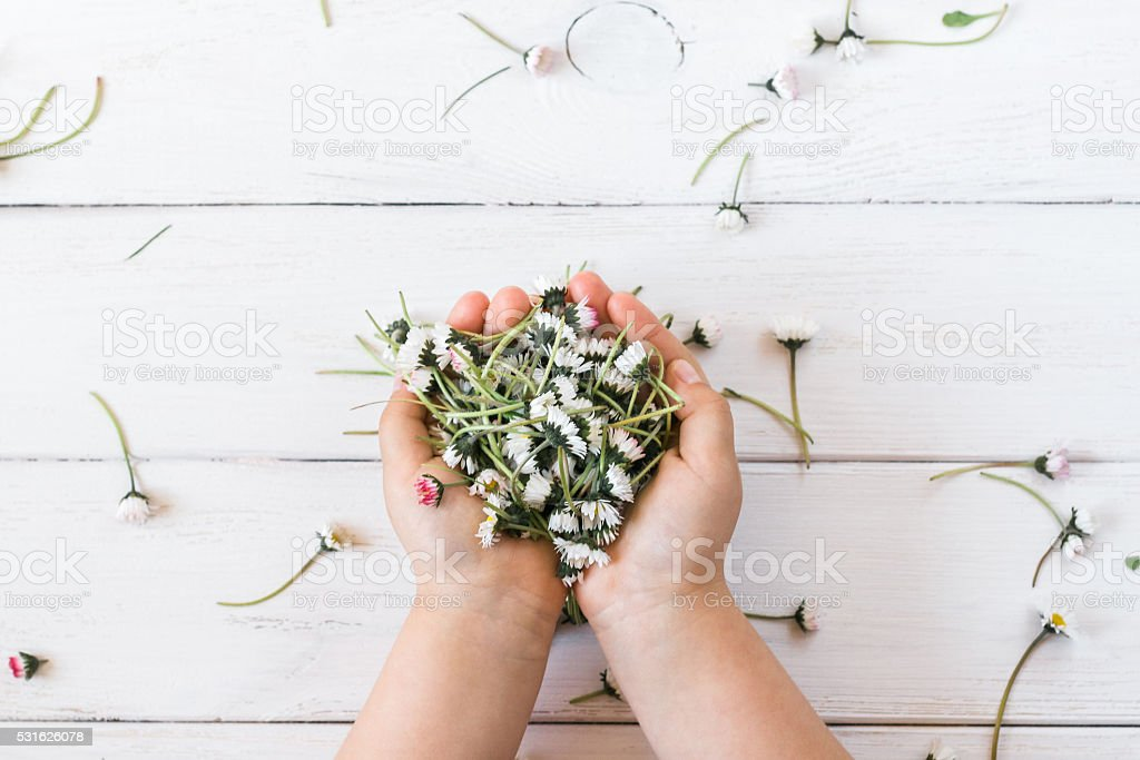 flowers in child's hands flay lay stock photo