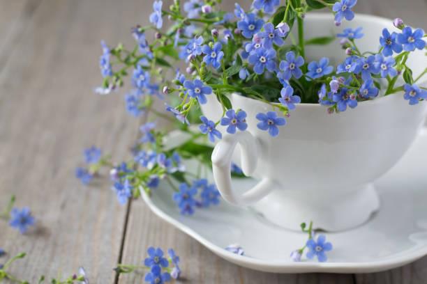 flores no copo - miosótis - fotografias e filmes do acervo