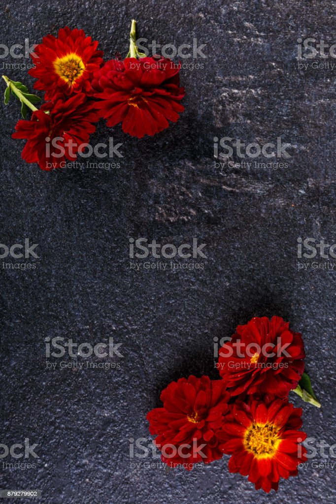 Flowers in different corners on a stone background stock photo