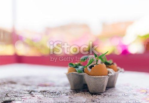 flowers in egg shell on egg panel