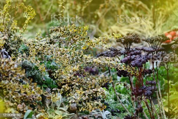 Flowers in fall garden various flowers blossom in autumn garden picture id1213050192?b=1&k=6&m=1213050192&s=612x612&h=uyl5vv eq8p nsdkuzwl8n9vo9q0daog u19rbpkbn8=