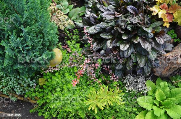 Flowers in fall garden various flowers blossom in autumn garden picture id1213050395?b=1&k=6&m=1213050395&s=612x612&h=fvfwkgd5 e9msds9no3rpihriyfei1mwyqbl92orcta=