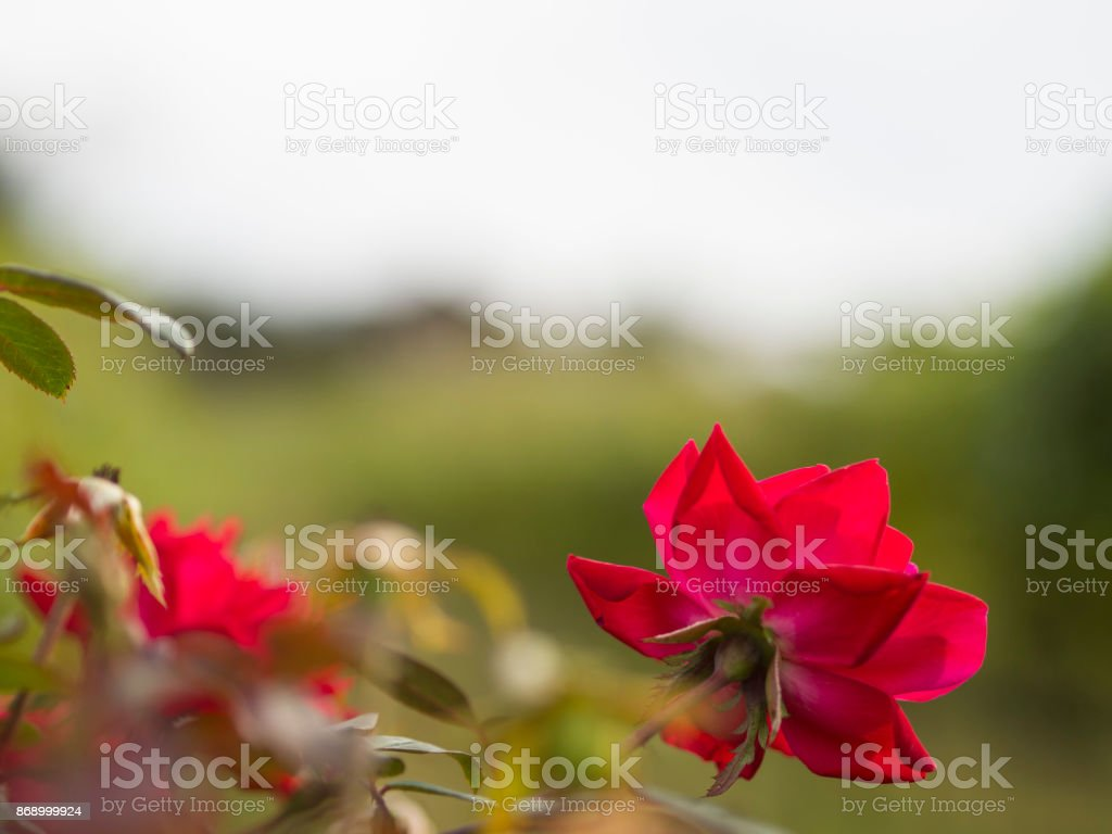 Flowers in Focus stock photo