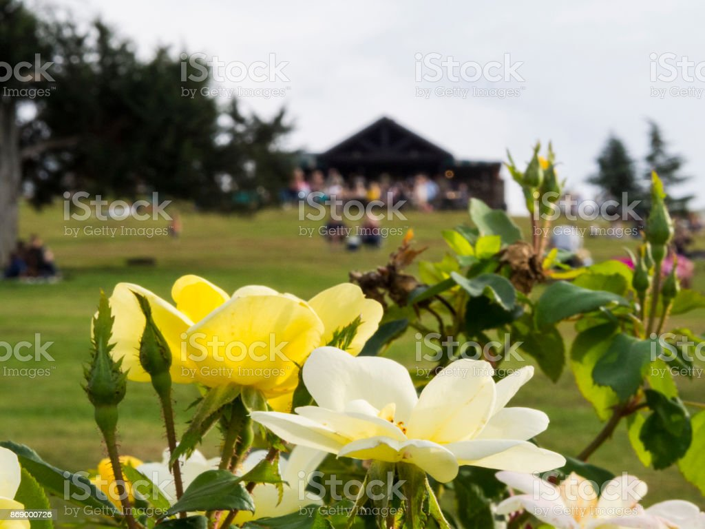 Flowers in Foreground of Vineyard stock photo