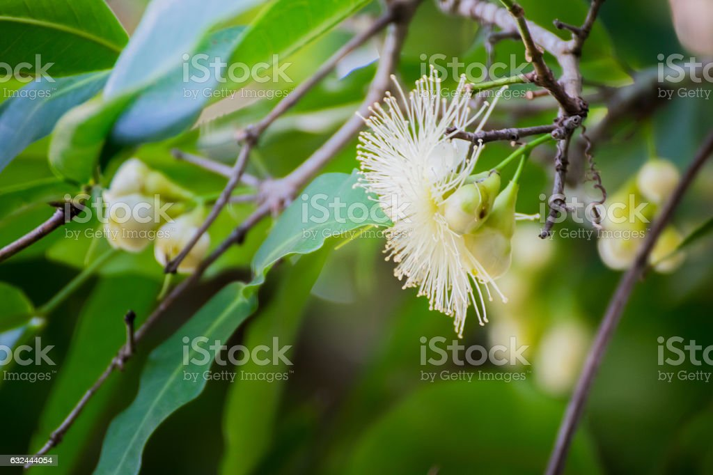 Flowers in forest stock photo