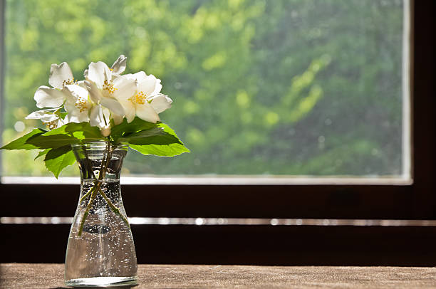 flowers in front of window - kellyjhall stock pictures, royalty-free photos & images