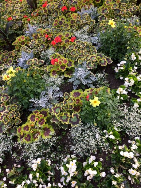 IMG_1824 Flowers in garden stock photo